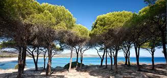 spiaggia con pineta